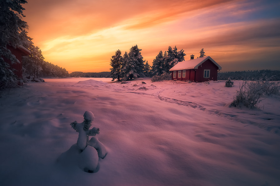 Morning Light XVI by Ole Henrik Skjelstad