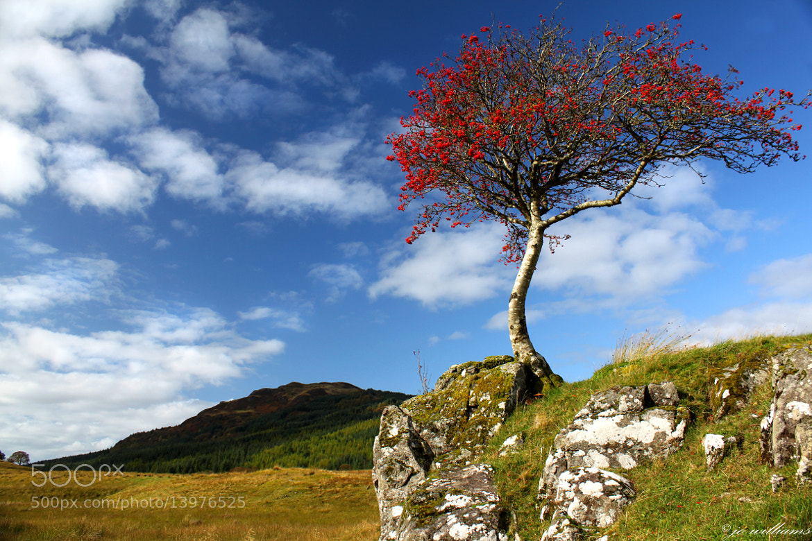 Photograph RED TREE II by jo williams on 500px