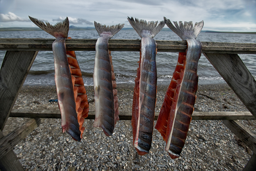 Drying Salmon by David Wright on 500px.com