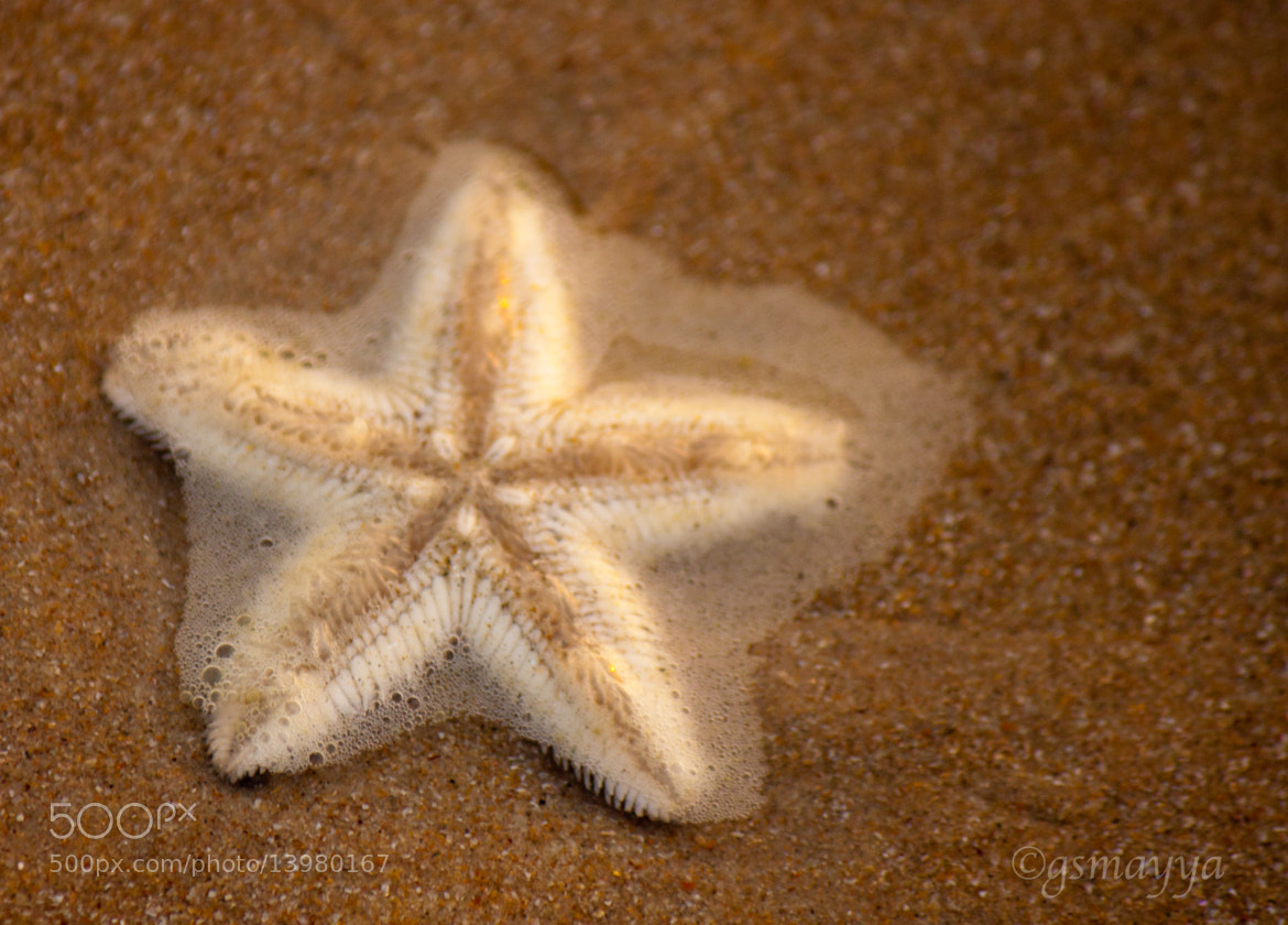 Photograph Star fish by Gururaj Seetharama on 500px
