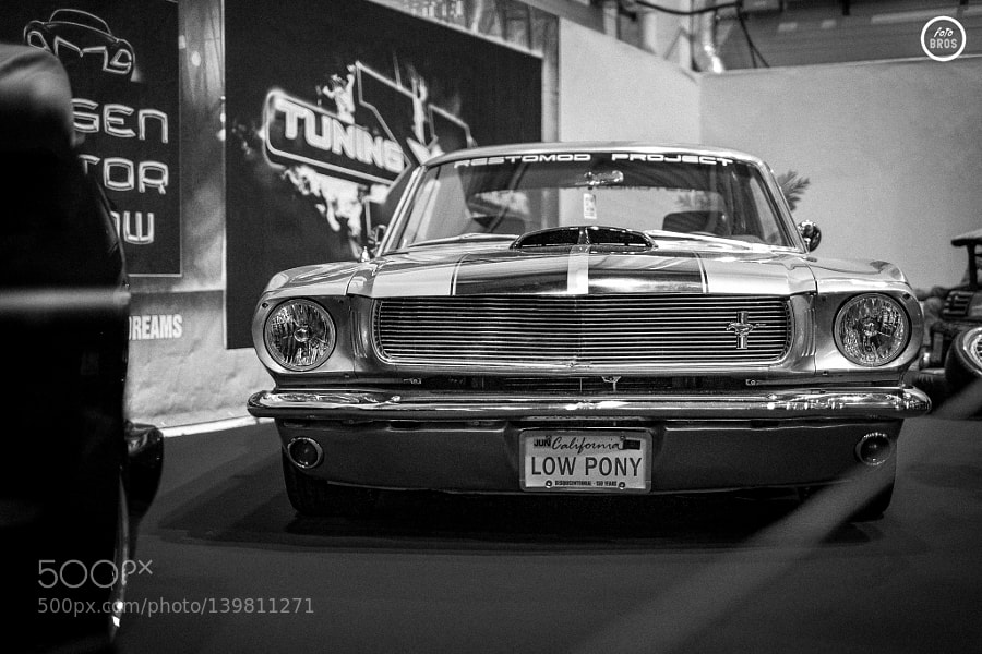 LOW PONY | Mustang