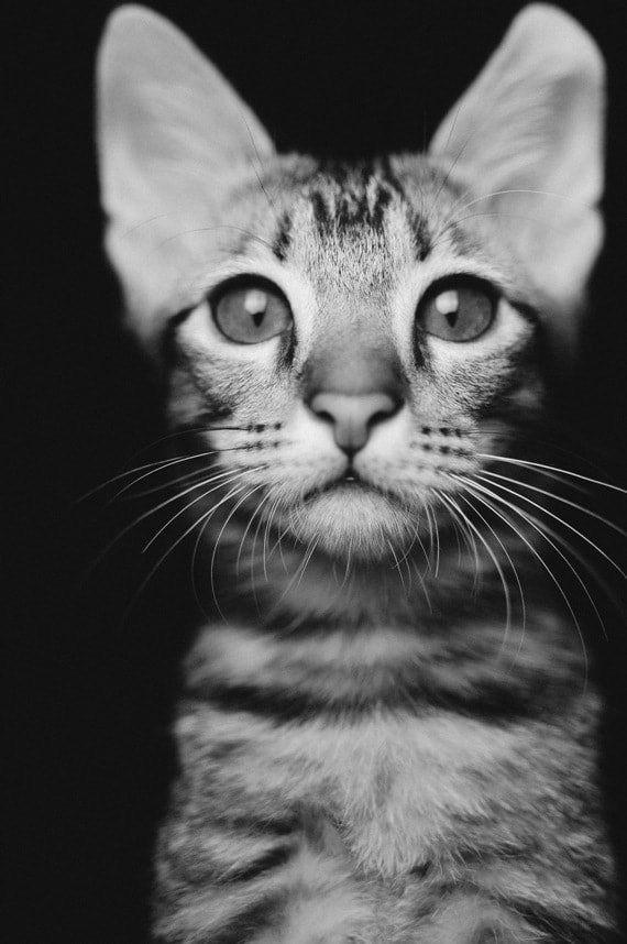Photograph Max by Fred Melot on 500px