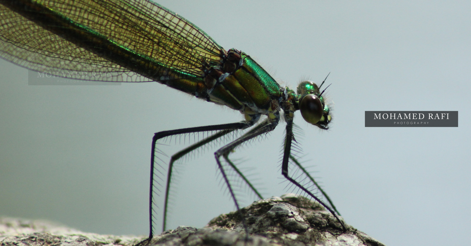 Photograph Damesfly by Mohamed  Rafi on 500px