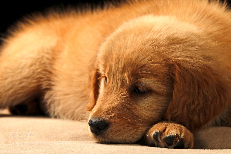 Photograph tired!! by Cristobal Garciaferro Rubio on 500px