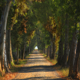 the way of the eucalyptus by Riccardo  Lubrano (RICCARDOLU)) on 500px.com