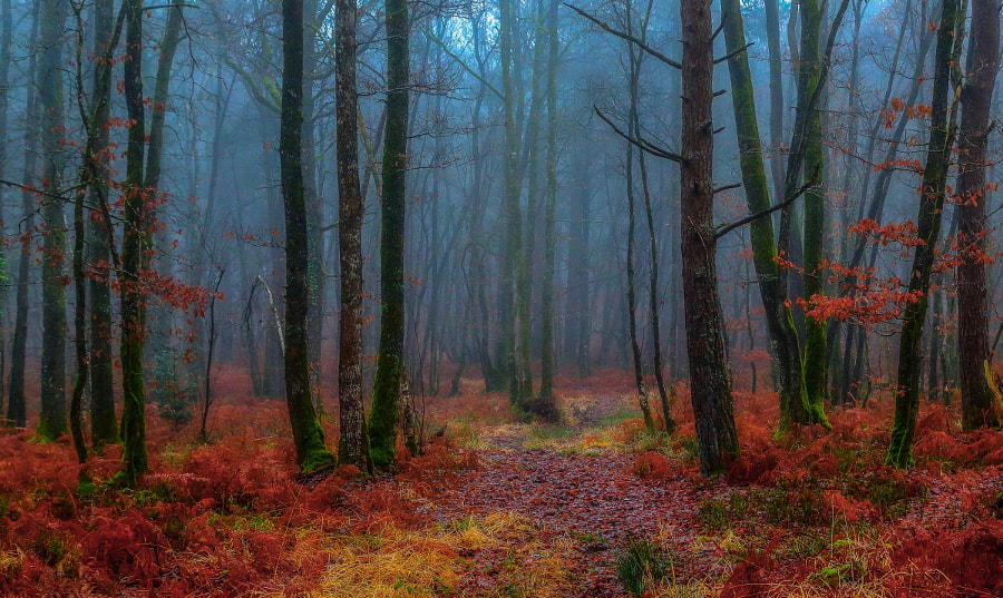 Forest atmosphere! by Patrice Thomas