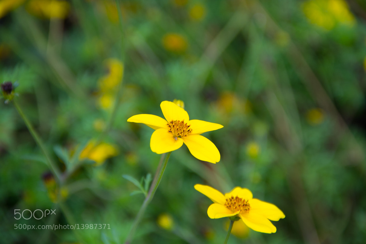 Photograph yellow and green by Ahmed Alhashmi on 500px