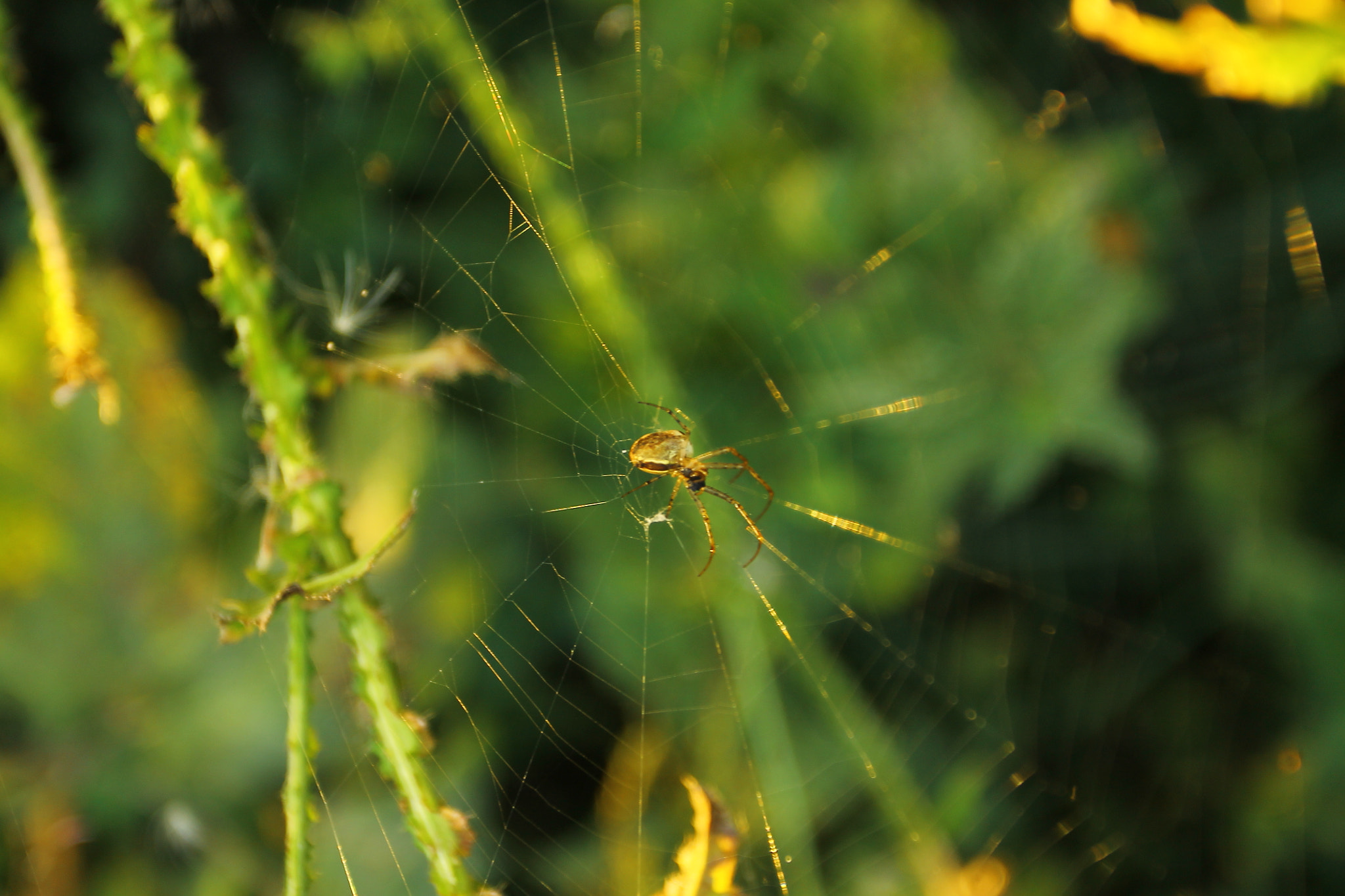 Photograph spiDeR by Manuel Stolle on 500px