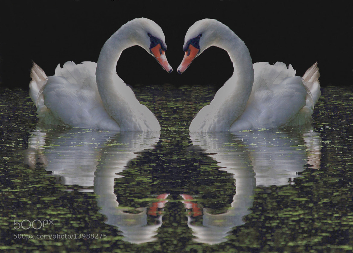 Photograph Love by Steve Adams on 500px