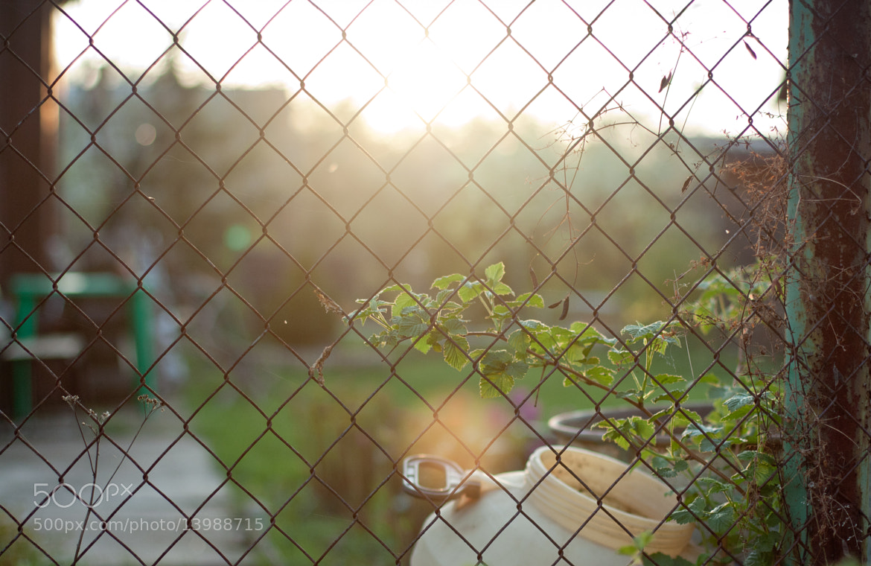 Photograph To the sun by Vladimir Senchikhin on 500px