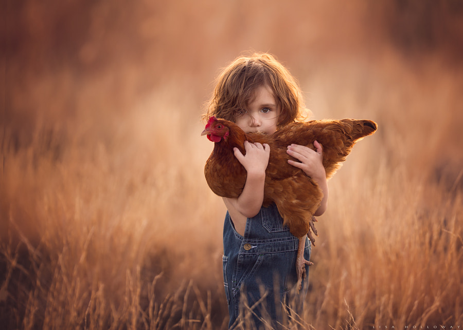 Chicken Peek-a-Boo by Lisa Holloway