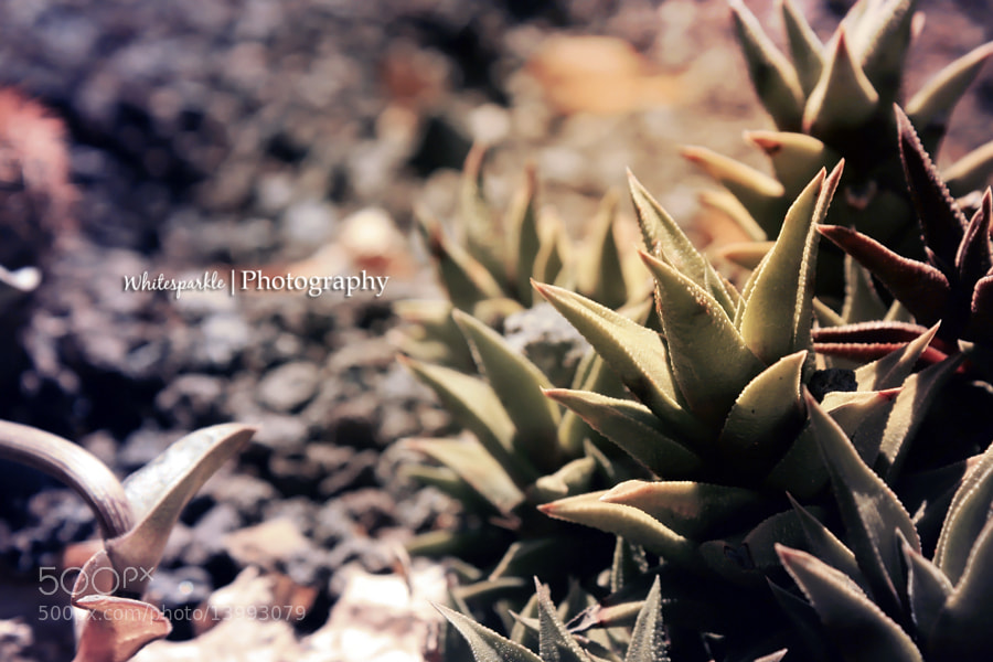 Photograph Plants by Kiara Torres on 500px