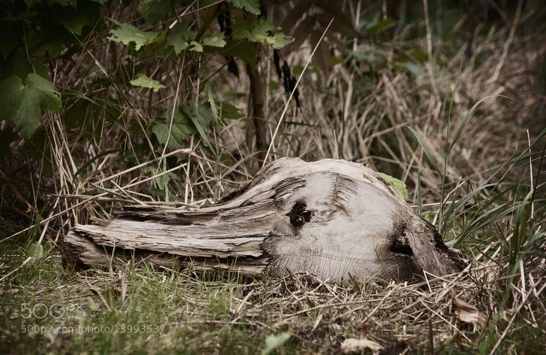 Photograph Duck head by Oleksiy Kovyrin on 500px