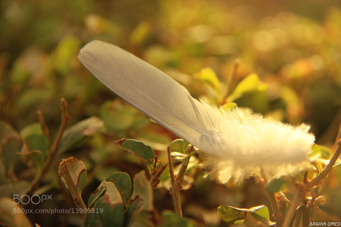 Photograph Good by my Friend .. Your feather will stay with me tell you Came back by Bawan  Baban on 500px