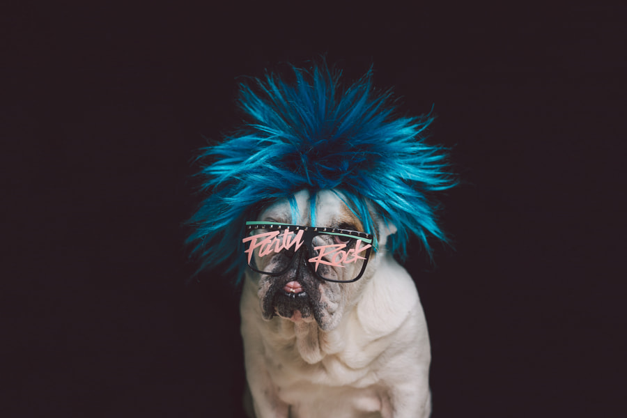 Party Rock! by The 3 bulldogs  on 500px.com