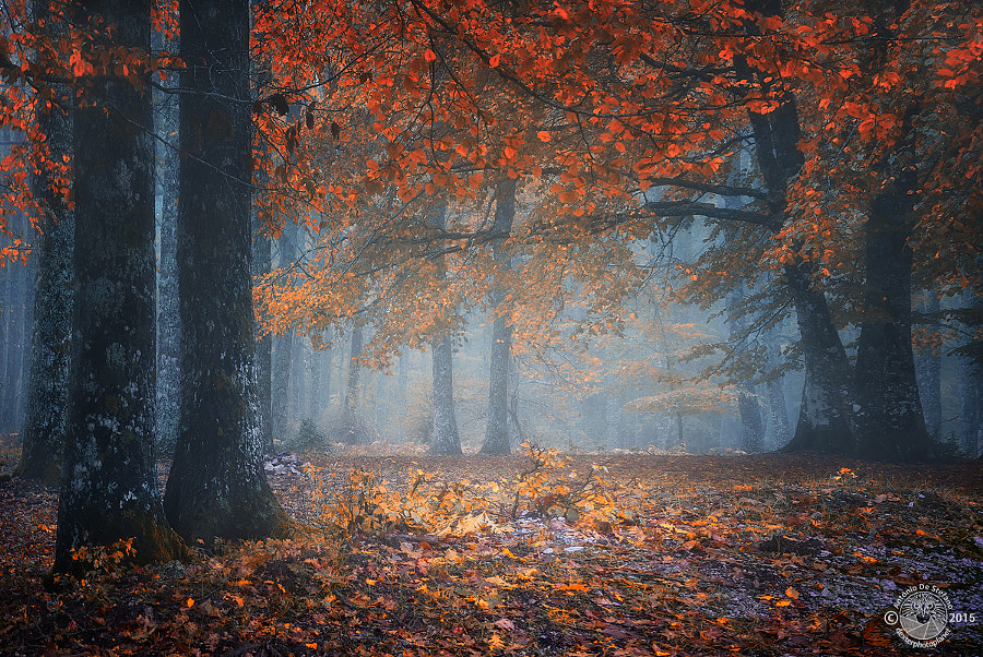 Autumn secrets by Antonio De Stefano on 500px.com
