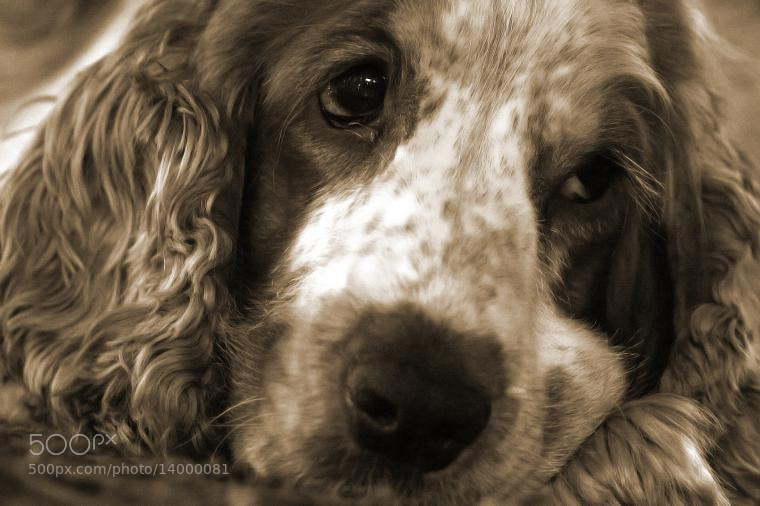 Photograph Relaxed dog. by Håvard Bergersen on 500px