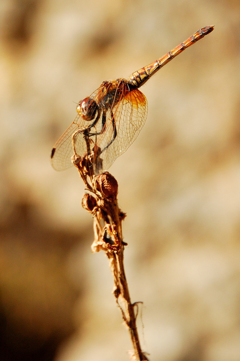 Photograph dragonfly by evren's  on 500px