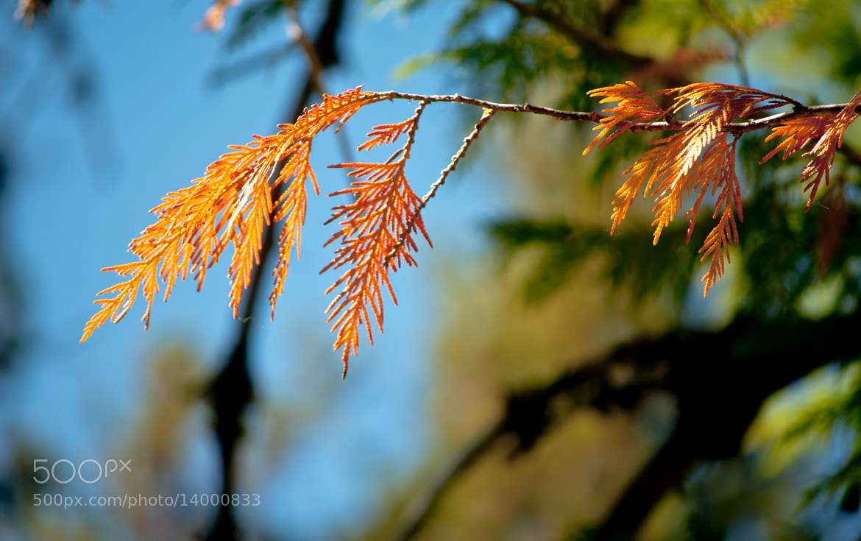Photograph Orange Tree Limb Glow by Orlin Bertsch on 500px