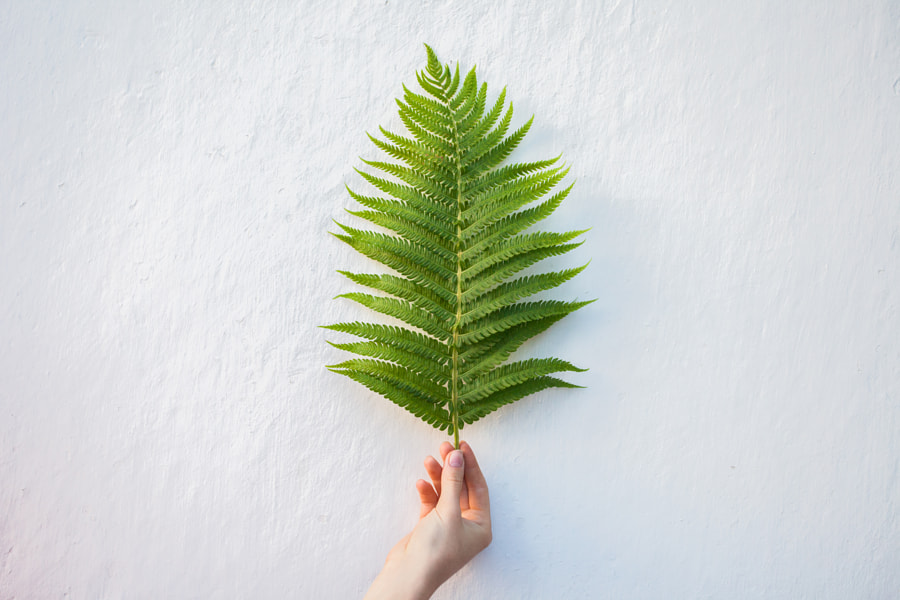 Hand holding young fern leaf by Oleksandr Boiko on 500px.com
