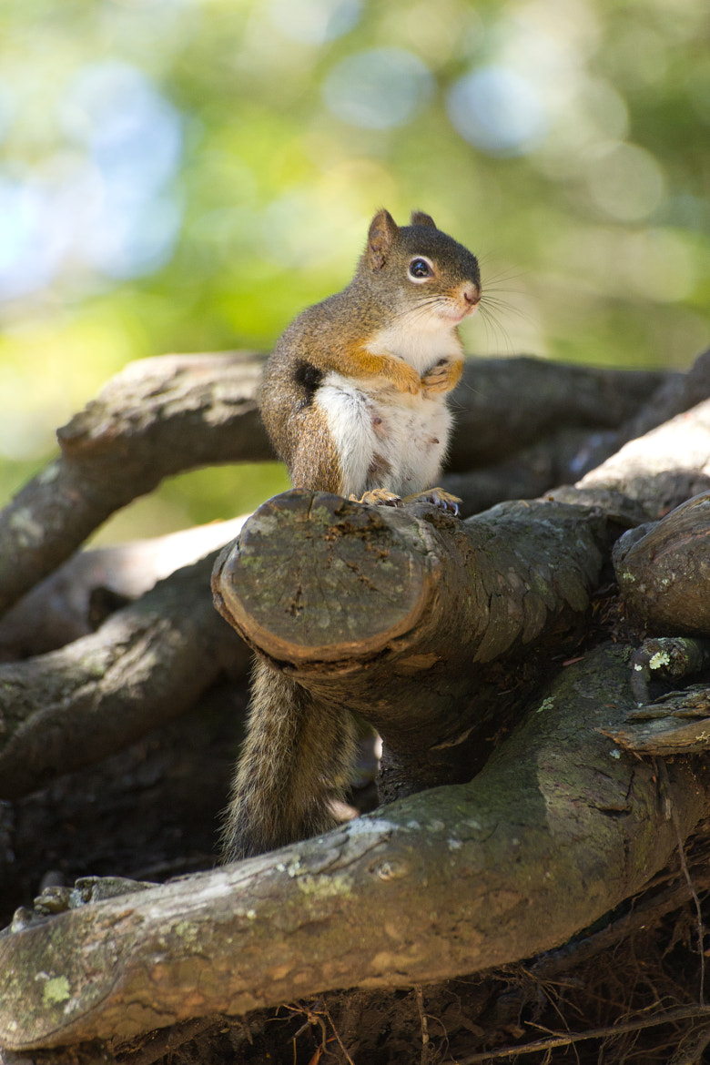 Photograph The squirrels good side by Phil Armstrong on 500px