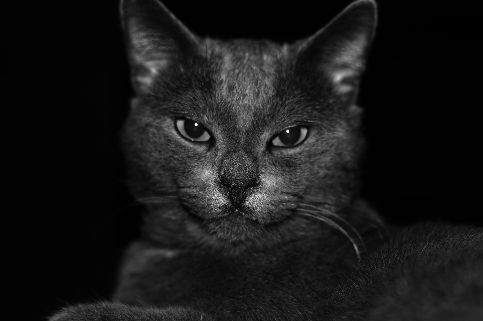Photograph Le chat by Eleftherios V on 500px