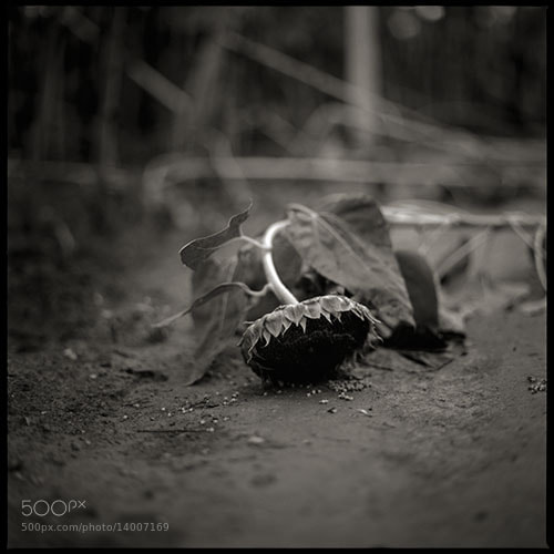 Photograph dead flower by Katsunori Yamaguchi on 500px