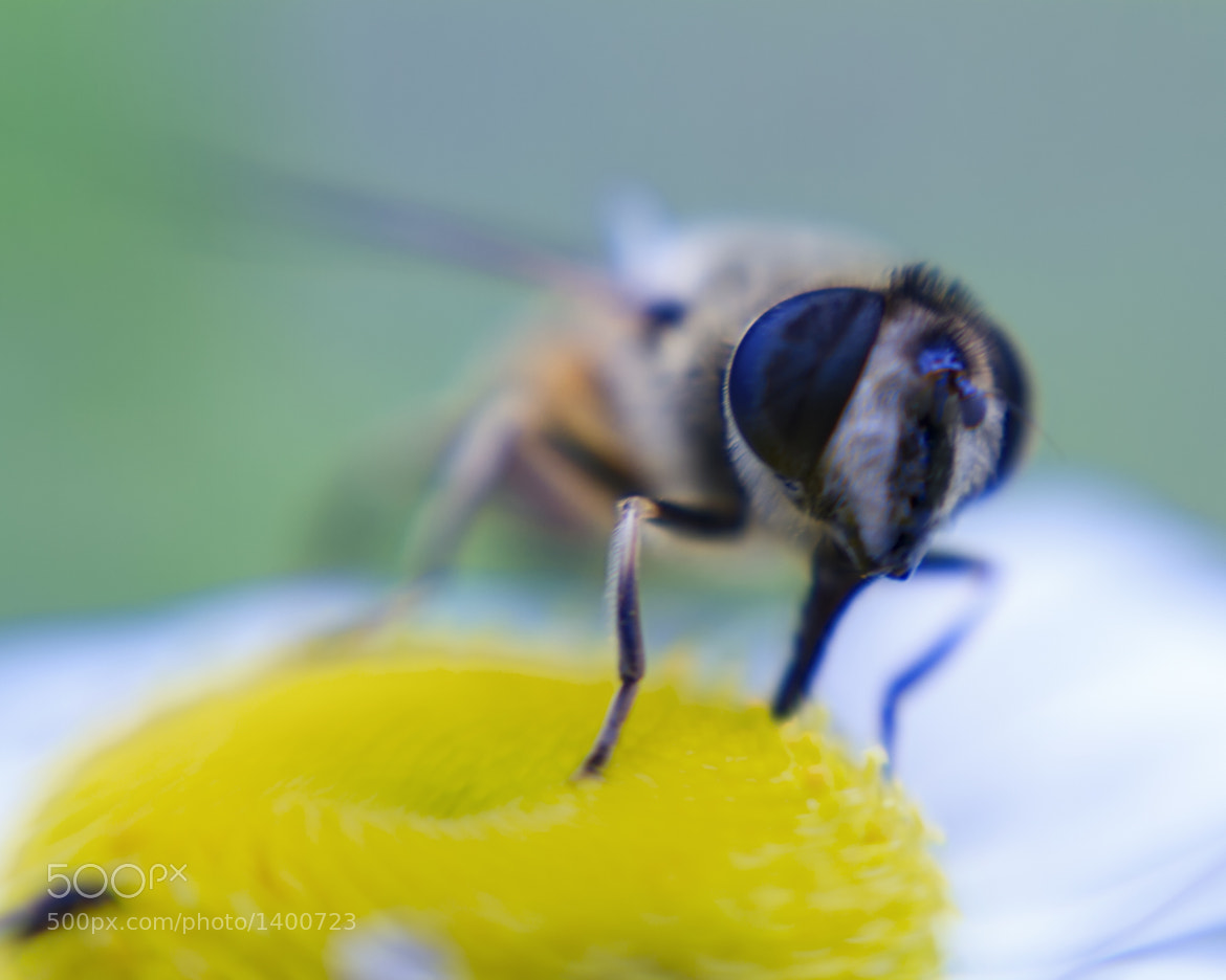 Photograph Fly Eyes by Matt H on 500px