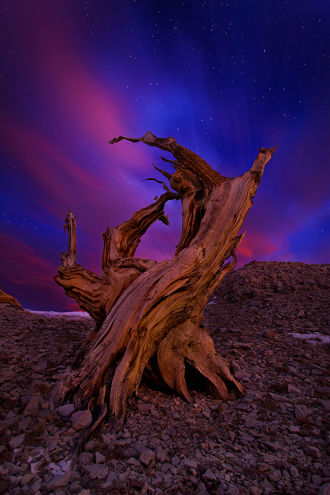 Photograph Writhing  by Miles Morgan on 500px