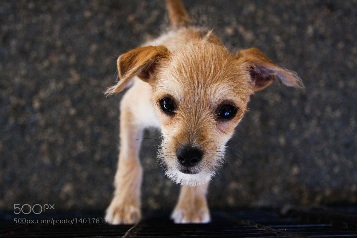 Photograph Shelter Puppy by Charity Smith on 500px