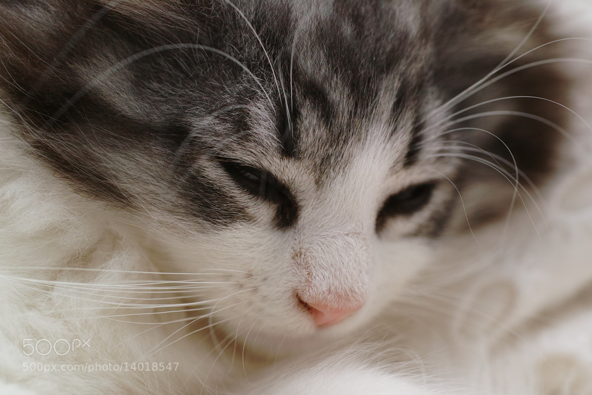 Photograph YUI by sevenhalf  on 500px