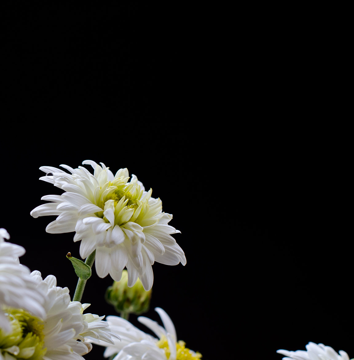 Photograph White Flower by Pawan Gupta on 500px