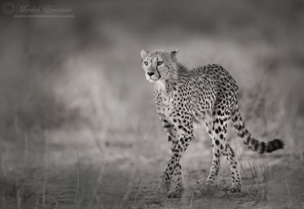 Photograph Hunter's Gait by Morkel Erasmus on 500px