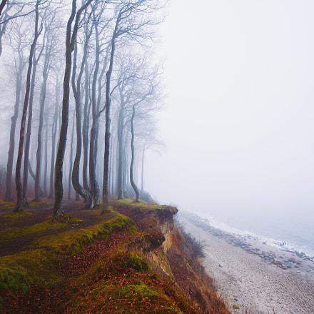 Buchenwald an der Steilküste