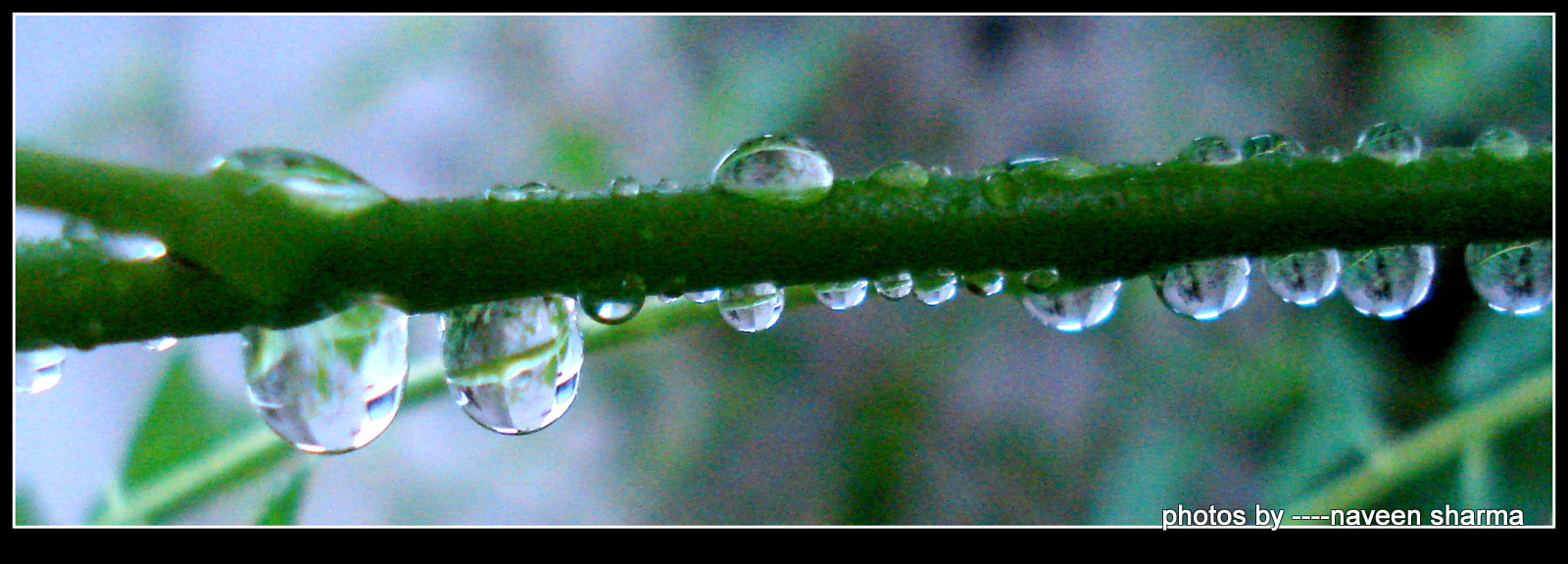 Photograph Rain dews attractions by naveen sharma on 500px