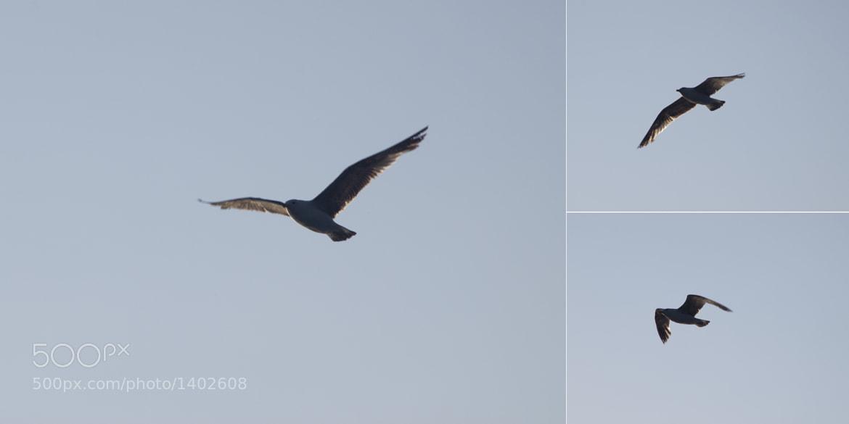 Photograph Flight(moments) by Dimitri Fursenko on 500px