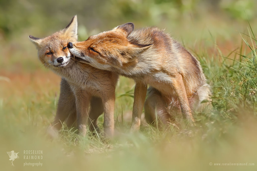 K-k-k-k-k-k-KISS! (Foxy Love) by Roeselien Raimond on 500px.com