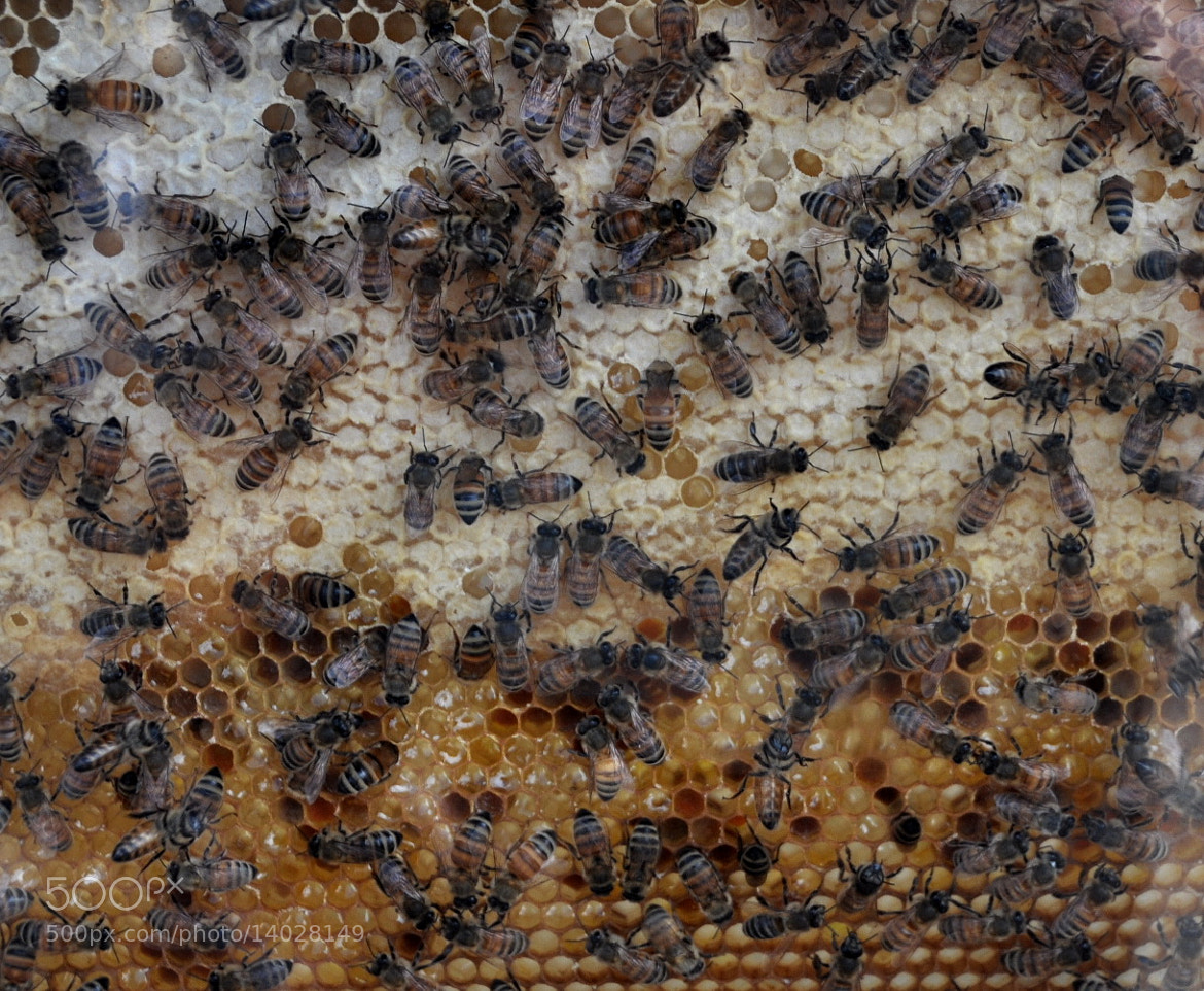 Photograph Hive by Ale Kro on 500px