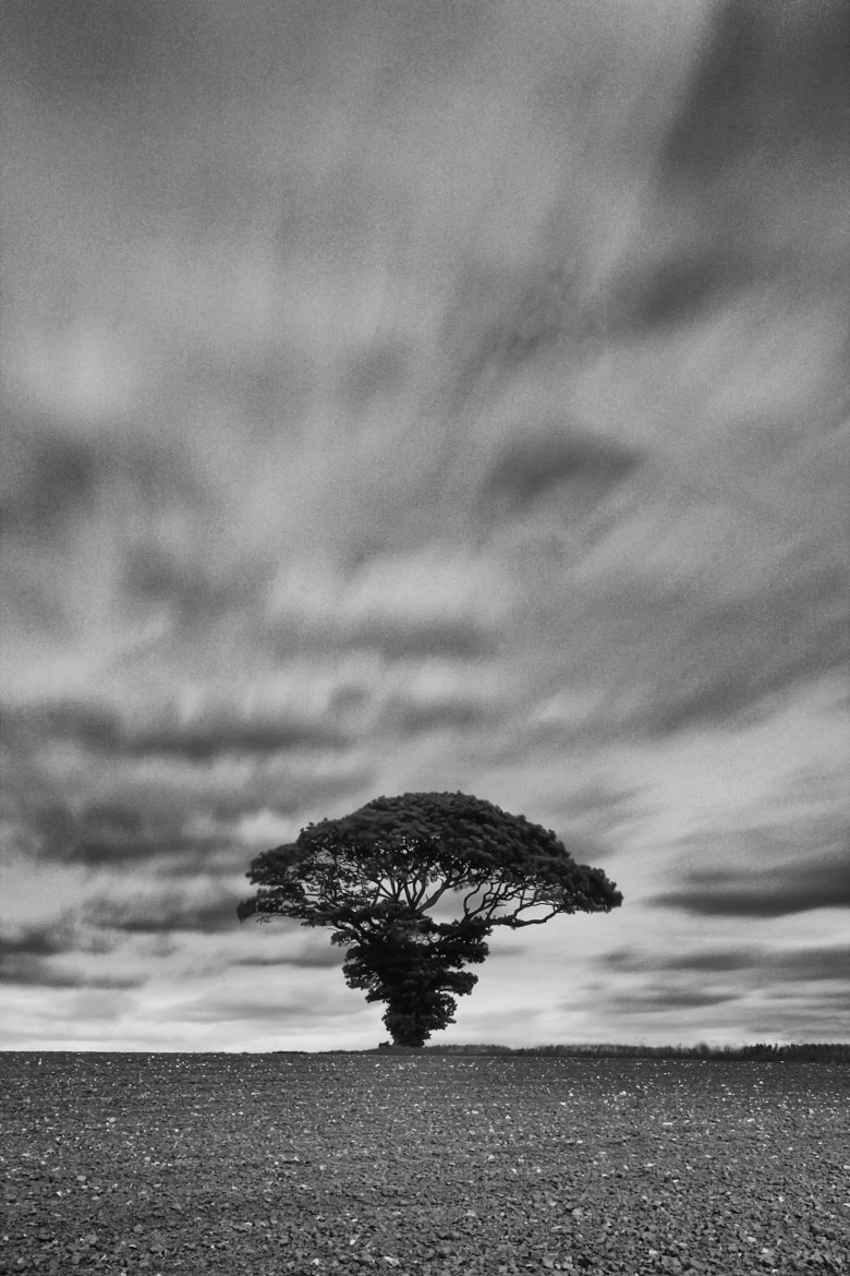 Photograph one two tree by Gail Sparks on 500px