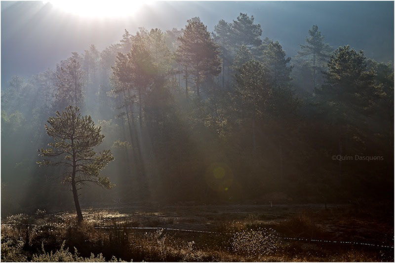 Photograph First rays of sun and dew by Quim Dasquens on 500px