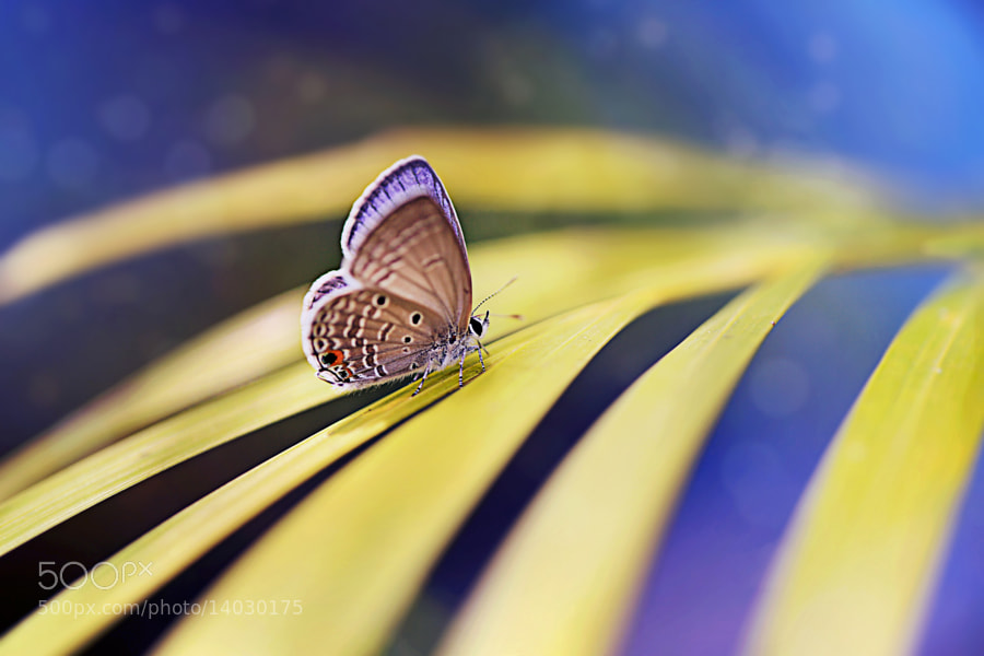 Photograph { Papillon } by Thai Hoa Pham on 500px