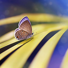 { Papillon } by Thai Hoa Pham (ThaiHoaPham)) on 500px.com