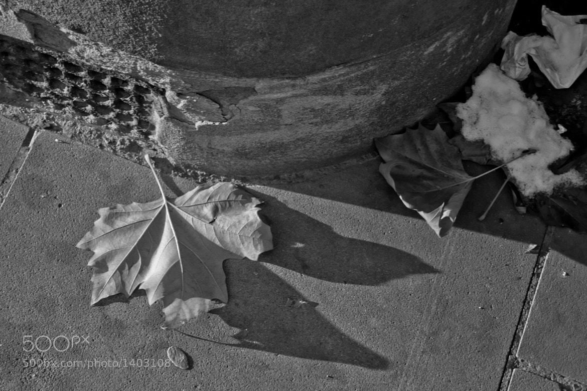 Photograph Leaves and shadow by Peter Allen on 500px