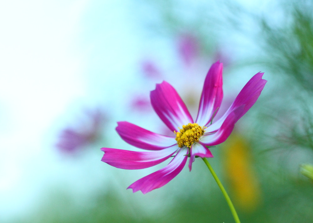 Photograph Autumn flower-1 by Sueo Takano on 500px