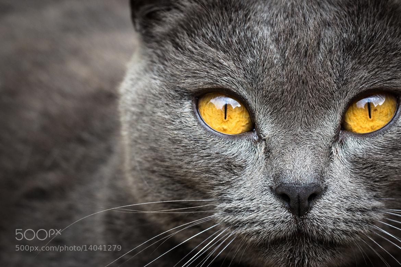 Photograph Goldeneye by Jérémy Dumon on 500px
