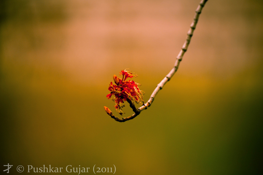 Photograph Nature's Hand by Pushkar G.  on 500px