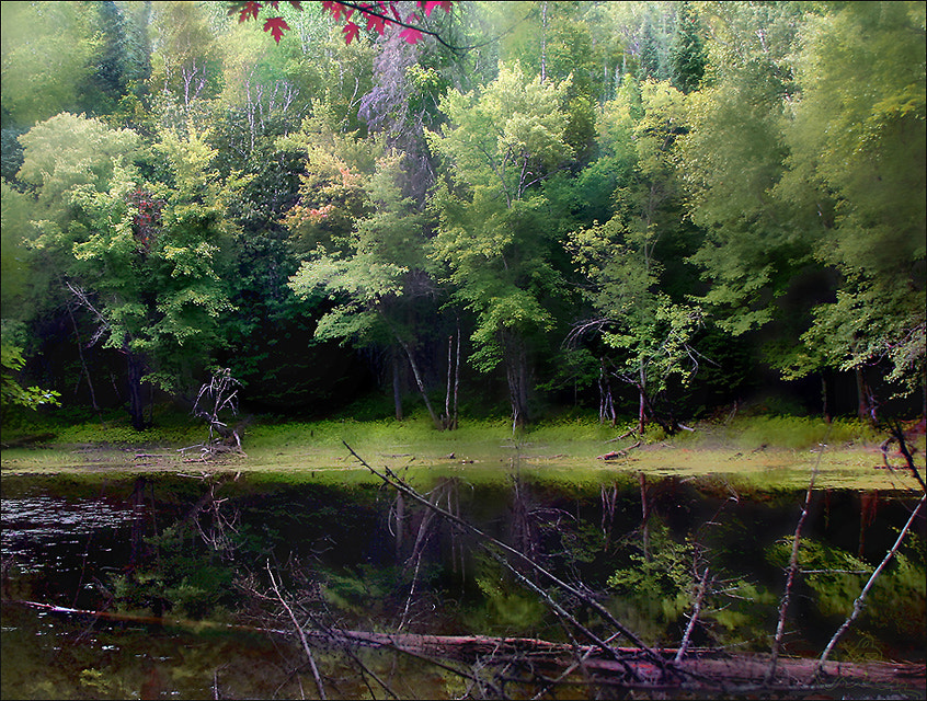 Photograph Forest river 2 by Alla  Lora on 500px