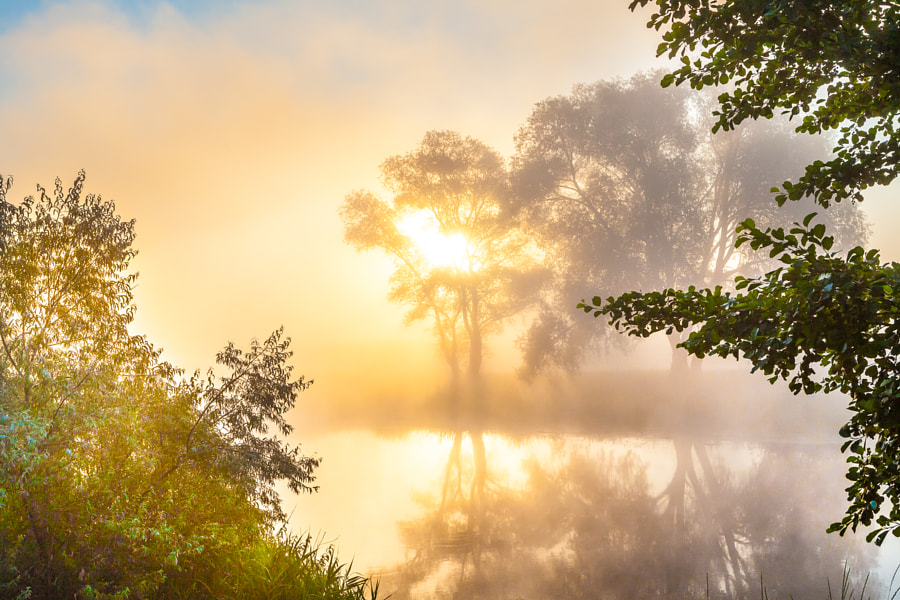 Misty dawn over the river and the forest. Mysterious tree silhouettes by Nick Yegorov on 500px.com
