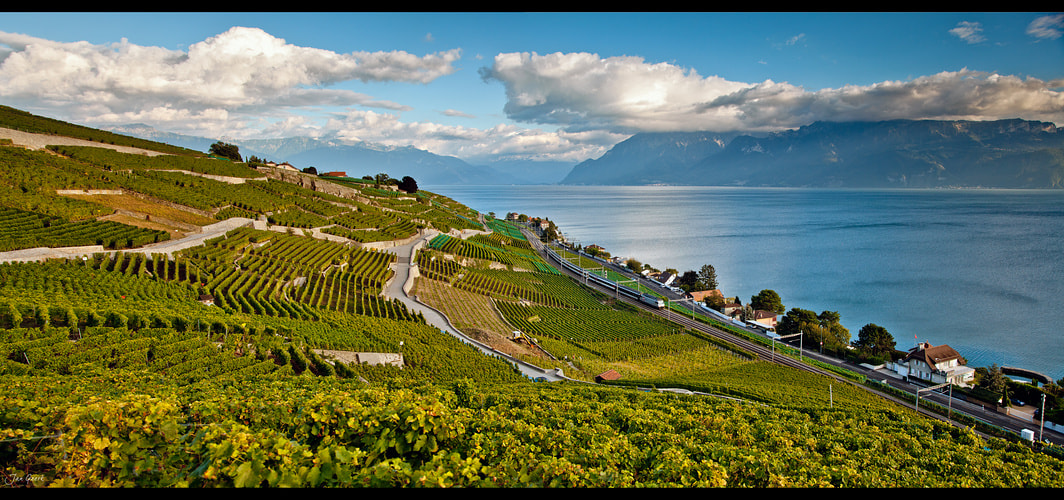 Photograph Into the Vineyards by Jan Geerk on 500px