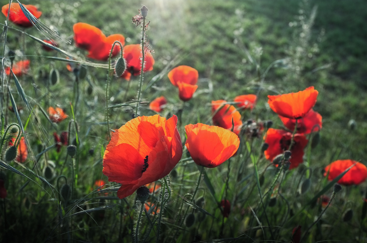 Photograph Blooming May by Simone Messaggi on 500px